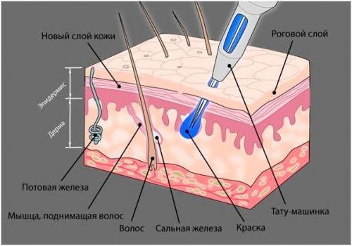 Чем делают пудровые брови. Что такое напыление бровей