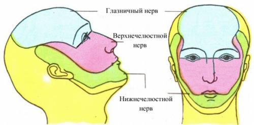 Анатомия лица для косметологов. Анатомические структуры: нервы, сосуды, сосуды лица