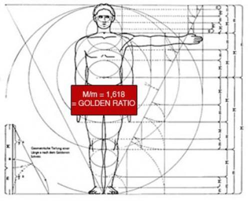 Золотое сечение тела человека. Тело человека и золотое сечение