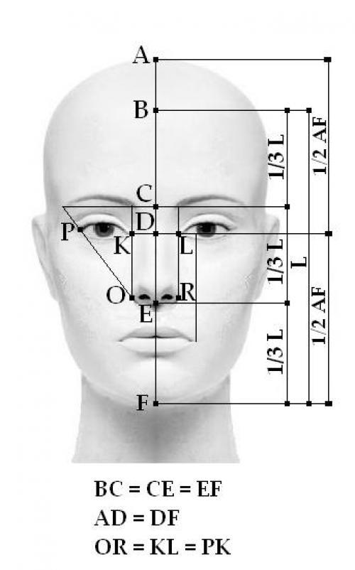 Анатомия лица для визажиста.