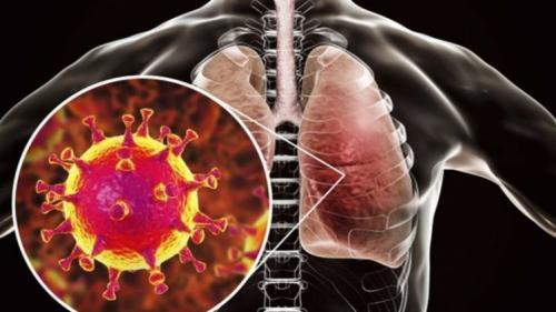 Что такое коронавирус человека и как им можно заразиться?