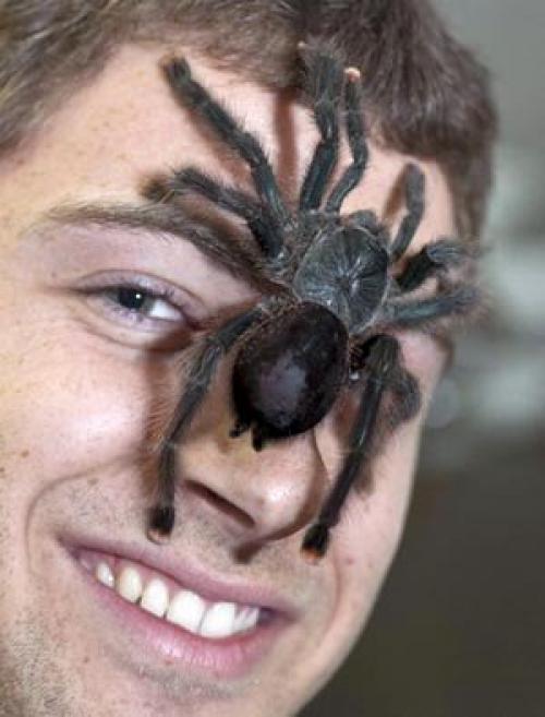 что поделать, вопрос паук ест людей картинки замужества, обрадовалась, что