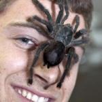 Теперь я поведаю вам историю о том, как в нашем доме появился паук - птицеед по имени Аркадий, или как батя зовет его Аркаша.